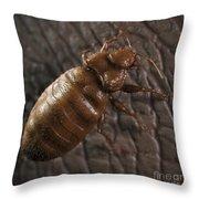 Bedbug Cimex Lectularius Throw Pillow