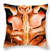 Bedbug Mouthparts, Sem Throw Pillow