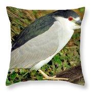 Black-crowned Night-heron Throw Pillow