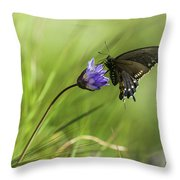 Pipevine Swallowtail Butterfly Throw Pillow