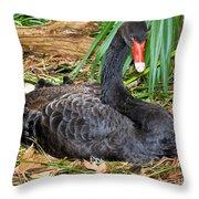 Black Swan At Nest Throw Pillow