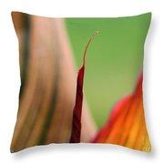 Canna Lily Named Durban Throw Pillow