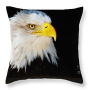 Closeup Portrait Of An American Bald Eagle Throw Pillow