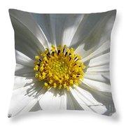 Cosmos Named Sensation Alba Throw Pillow