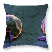 Cryptosporidium Throw Pillow