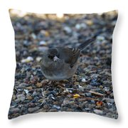 Dark Eyed Junco Throw Pillow