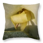 Dwarf Canna Lily Named Ermine Throw Pillow