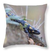 Fire Salamander - Salamandra Salamandra Throw Pillow