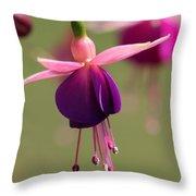 Fuchsia Named Lambada Throw Pillow