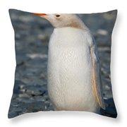 Gentoo Penguin Throw Pillow