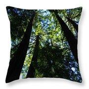 Giant Redwoods Throw Pillow