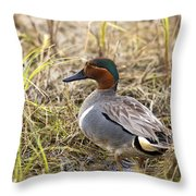 Greenwing Teal Throw Pillow
