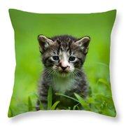 Kitty In Grass Throw Pillow