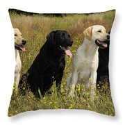 Labrador Retriever Dogs Throw Pillow