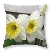 Large-cupped Daffodil Named Ice Follies Throw Pillow