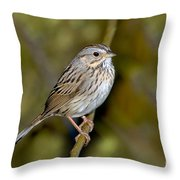 Lincolns Sparrow Throw Pillow