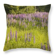 Maine Wild Lupine Flowers Throw Pillow