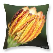 Osteospermum Named Sunadora Palermo Throw Pillow