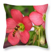 Oxalis Deppei Named Iron Cross Throw Pillow