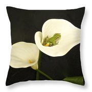 Pacific Tree Frog Throw Pillow