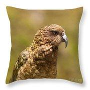 Portrait Of Nz Alpine Parrot Kea Nestor Notabilis Throw Pillow