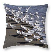 Royal Terns On The Beach At Indialantic In Florida Throw Pillow