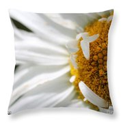 Shasta Daisy Named Paladin Throw Pillow