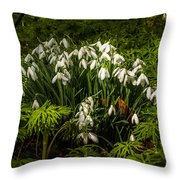 Snowdrop Woods Throw Pillow