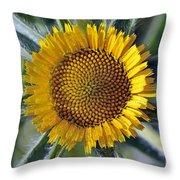 Spring Wild Flower Throw Pillow