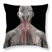 The Muscles Of The Back Throw Pillow