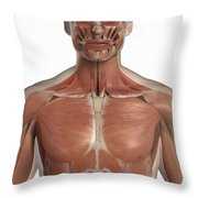 The Muscles Of The Upper Body Throw Pillow