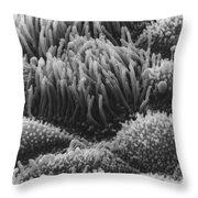 Trachea Lining Sem Throw Pillow