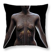 Urinary System Female Throw Pillow