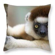 Verreauxs Sifaka In Berenty Throw Pillow