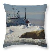 Walrus Resting On Ice Floe Throw Pillow