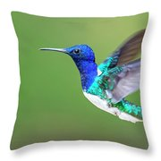 White-necked Jacobin Throw Pillow