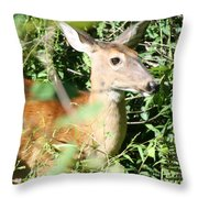White Tailed Deer Portrait Throw Pillow