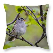 Whitecrowned Sparrow Throw Pillow