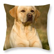 Yellow Labrador Throw Pillow