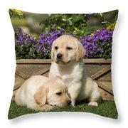 Yellow Labrador Puppies Throw Pillow