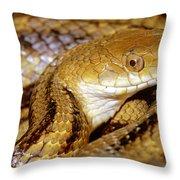 Yellow Rat Snake Throw Pillow