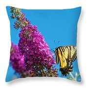 Yellow Tiger Swallowtail Papilio Glaucus Butterfly  Throw Pillow