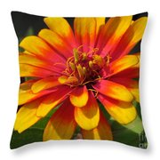 Zinnia Named Swizzle Scarlet And Yellow Throw Pillow