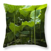 4858 Throw Pillow