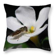 Bacopa Named Snowtopia Throw Pillow