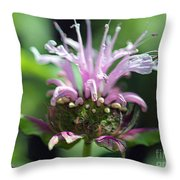 Bee Balm From The Panorama Mix Throw Pillow