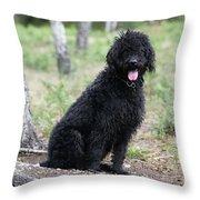 Black Labradoodle Throw Pillow