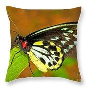 Cairns Birdwing Butterfly Throw Pillow