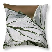 Caladium Named White Christmas Throw Pillow