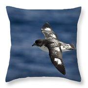 Cape Petrel Throw Pillow